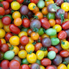 Tomaten Rainbow Cherry